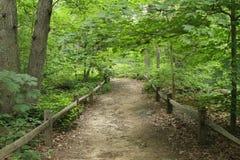 有篱芭的森林道路 免版税库存图片