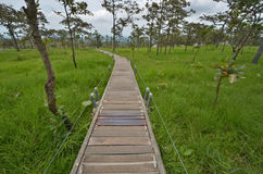 有篱芭的长的具体桥梁在绿草领域 免版税库存照片
