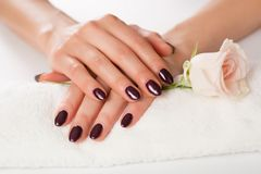 有紫色指甲油的女性手与在白色毛巾和桃红色玫瑰的闪亮金属片在白色背景 库存照片