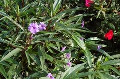 有紫色,桃红色和红色花的绿叶 免版税库存图片