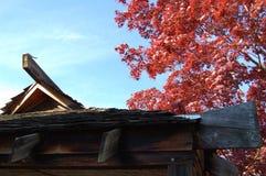 有红槭树的日本亭子 免版税库存图片