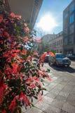 有红色丝带的布什在街道站立 免版税库存照片