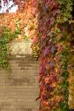 有红色叶子的上升的植物在秋天 库存图片