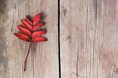 有红色叶子的枝杈在老木头 库存图片