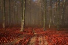 有红色叶子的美丽的典雅的有雾的森林 免版税库存图片