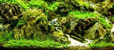 有红色嘘的绿色美丽的被种植的热带淡水水族馆 免版税库存图片