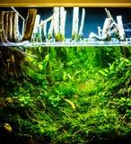 有红色嘘的绿色美丽的被种植的热带淡水水族馆 免版税库存照片