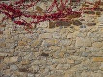 有红色常春藤分支的石墙 免版税库存照片