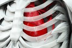 有红色心脏的躯干 免版税库存图片