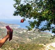 有红色片剂的妇女的手设法拍唯一红色石榴石果子照片在树的,有在海岸的令人惊讶的看法从 库存图片