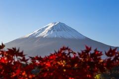 有红色秋天叶子的富士山。日本 免版税图库摄影