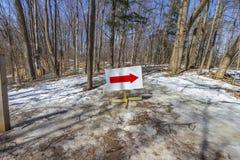 有红色箭头标志的春天森林 免版税库存图片