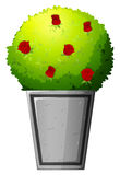 有红色花的一棵植物 免版税库存照片