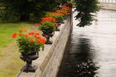 有红色花的花圃在河视图 库存图片