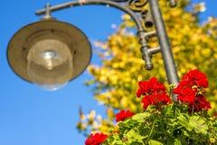 有红色花的街道灯笼 免版税库存照片