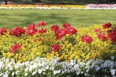 有红色郁金香和蝴蝶花的花圃 库存照片