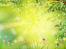 有红色黄色郁金香的春天复活节。EPS 10 免版税库存图片