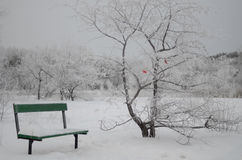 有红色蝴蝶的美丽的冬天公园在树 免版税库存照片