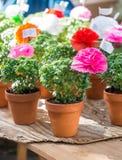 有纸花和诗的蓬蒿植物在圣安东尼卖了 库存照片
