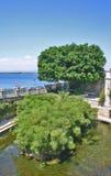 有纸莎草工厂的Arethusa喷泉在Ortygia,西勒鸠斯(Sici 图库摄影