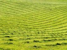 有线路的1被割的草坪 库存图片