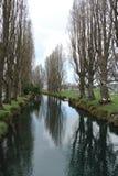 有结构树的河 库存图片