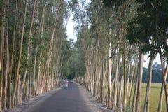 有结构树的路 免版税库存照片