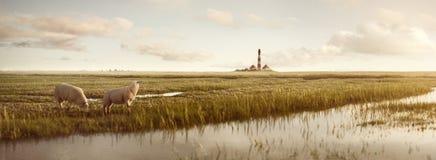 有绵羊和一座灯塔的草原在北海 免版税库存图片