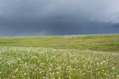 有绵羊的牧羊人 群在小山吃草 青山 夏季 库存照片