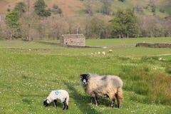 有绵羊的石谷仓 免版税库存图片