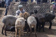 有绵羊的老人在星期天家畜市场,喀什,中国上 免版税库存图片