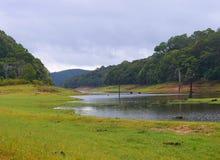 有绿叶的Periyar雨季的-伊杜克克镇,喀拉拉,印度湖和森林-自然本底 免版税图库摄影
