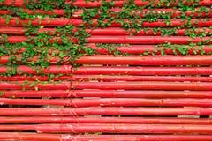 有绿色卷曲植物的红色木墙壁 免版税库存照片