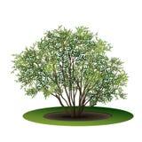 有绿色叶子和阴影的布什 向量例证