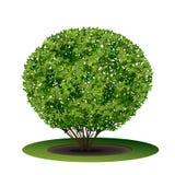 有绿色叶子和阴影的布什 库存例证