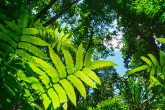 有绿色叶子的多雨森林 库存图片