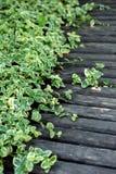 有绿色叶子的木板条木板走道 免版税库存图片