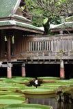 有绿色屋顶的一个棕色泰国房子在荷花池附近 免版税库存图片