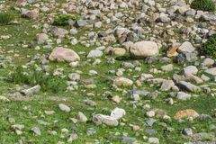 有绿色常春藤纹理的老石墙 图库摄影