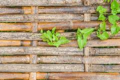 有绿色微小的植物的竹走道米领域的 免版税图库摄影