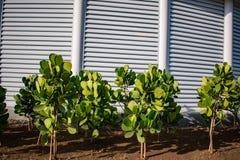 有绿色果树园充分的hd的庭院 库存照片