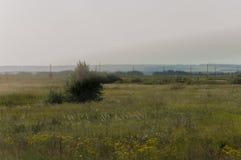 有绿色树和很远蓝天的金草甸 镇静夏天 培养的区域 农业 黄色草好天气 Travelli 库存图片