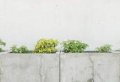 有绿色植物的特写镜头表面水泥罐在老水泥墙壁上在有拷贝空间的庭院里构造了背景 免版税库存图片