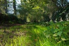 有绿色植被的法国农村小径 免版税库存图片
