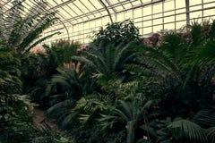 有绿色热带植物、棕榈和catuses的热带道路在著名植物园在慕尼黑 库存照片