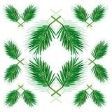 有绿色的棕榈枝杈在白色背景离开 免版税图库摄影