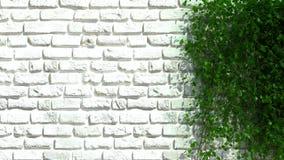 有绿色篱芭的砖墙 库存图片