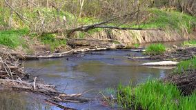有绿色银行的森林河 影视素材