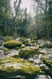 有绿色青苔的大石道路在森林中间 免版税库存图片