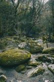 有绿色青苔的大石道路在森林中间 库存照片